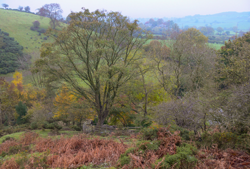 Autumn Colours, Shropshire
